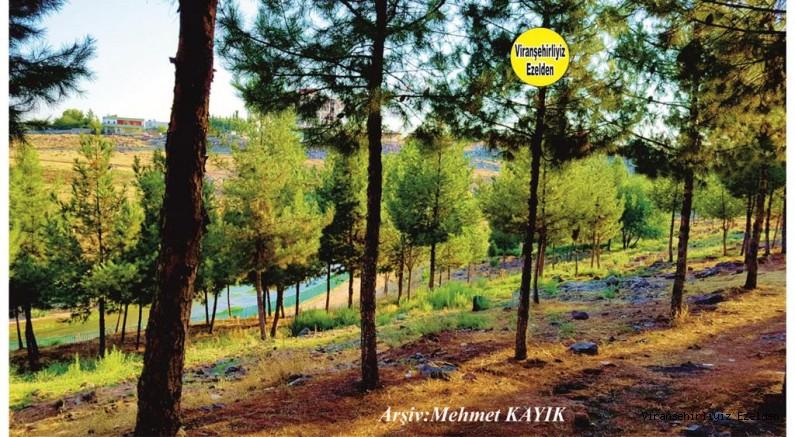 Viranşehir Curcup Ormanı